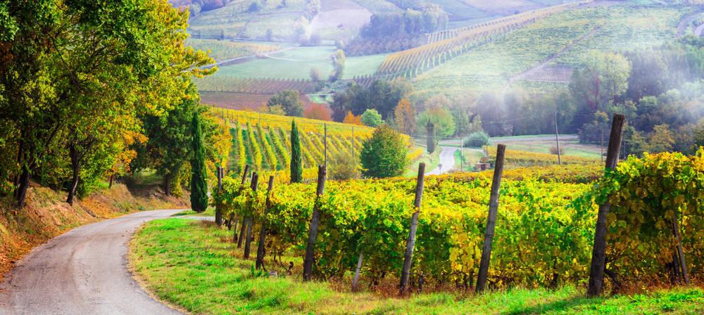 La importancia del sector vitivinícola en España
